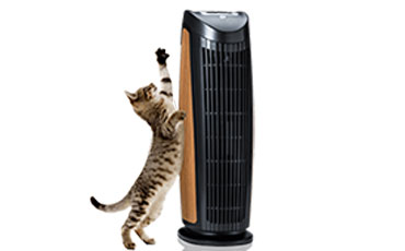 air purifier for pet
