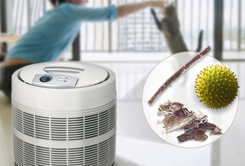 Air Purifiers for Allergies reviews